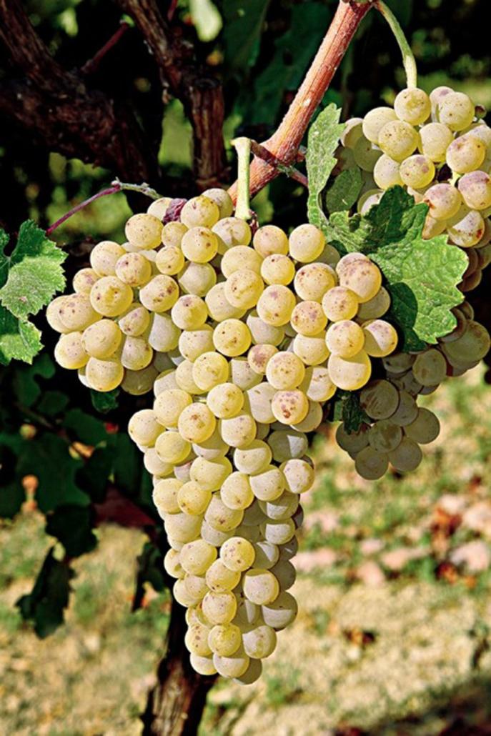 Vilana Wines of Greece